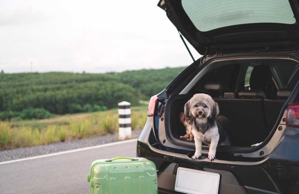 How to Road Trip Around Australia With Your Dog